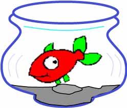 Tipps und Tricks zu Aquarien